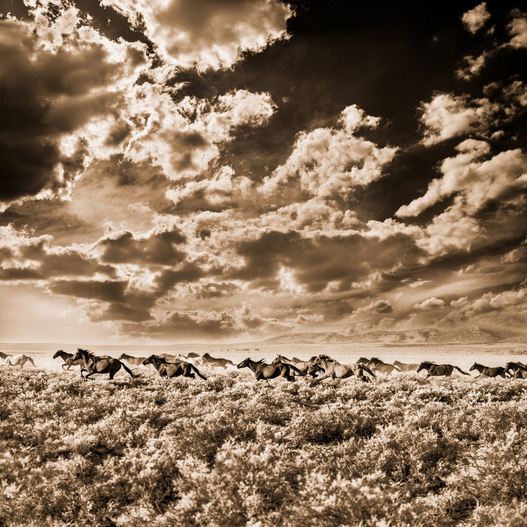 Wild Mustangs, Wells, Nevada by Brown Cannon